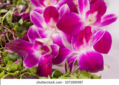 Fresh crisp Purple Orchids Blooms with Micro greens. Fresh salad ingredients, garnish and edible flowers on white background.