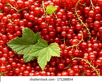 fresh cropped redcurrants with leaves