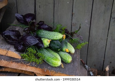 Fresh cucumbers and herbs just gathered redy for fermentation on rustik wooden background