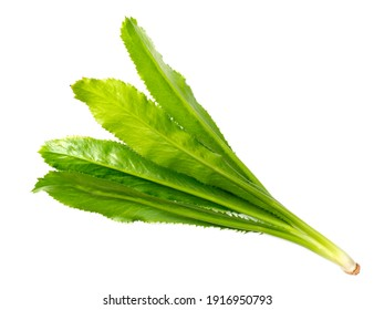 fresh culantro leaves isolated on white background, top view