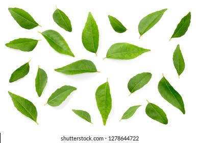 fresh curry leaves isolated on the white background, top view