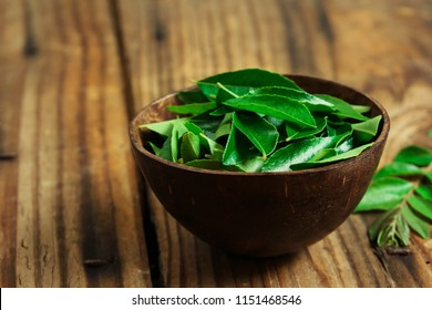Fresh Curry leaves still life on  dark moody background, selective focus