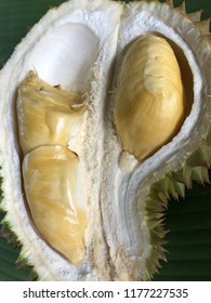 Fresh cut of durian, the king of tropical fruits and the most popular and expensive fruits in Asian, This fruits produced  pleasant sweet fragrance but some may find it as unpleasant odour.