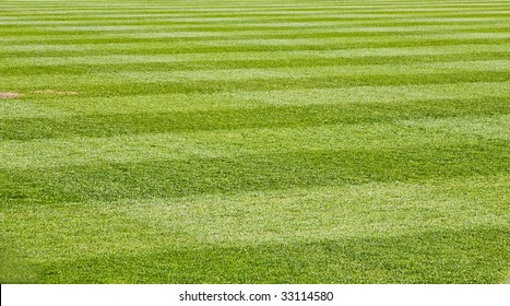 Fresh Cut green grass on a new baseball field