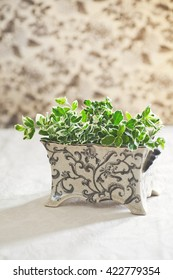 Fresh cut green plant with variegated leaves in decorative ceramic - floral patterns background and table top surface. Natural light.