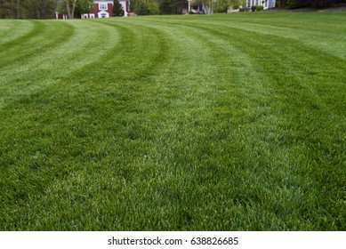 Fresh cut lawn with beautiful green grass and stripes in residential neighborhood.