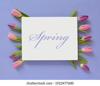 Frisch geschnittene rosa und violette Tulpen auf violettem Hintergrund im horizontalen Format in flacher Laienzusammensetzung.  Weiße Karte mit Platz für Text.