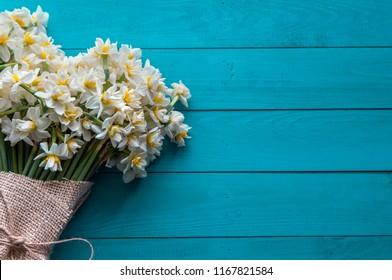fresh daffodils on turquoise background