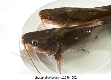 Fresh dead catfish on plate