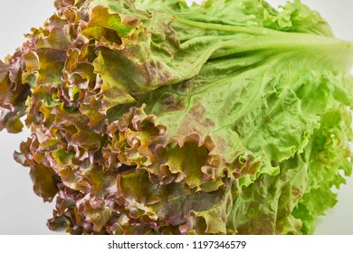 Fresh and delicious lettuce
