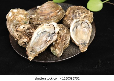 Fresh and delicious oysters