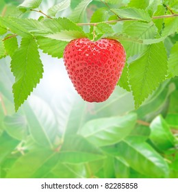 Fresh and delicious strawberry in the forest.