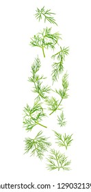 Fresh dill herb isolated on white background