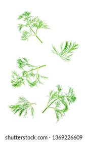 Fresh dill leaves on a white background. toning. selective focus