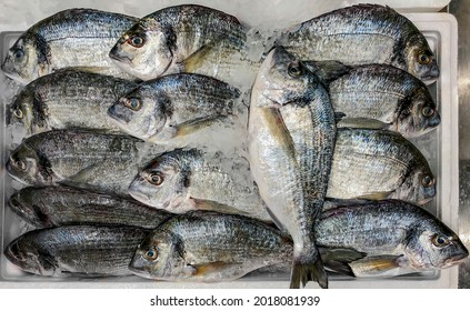 Fresh dorado fish (aka golden spar, sea carp or bream) are laid out in a box for sale
