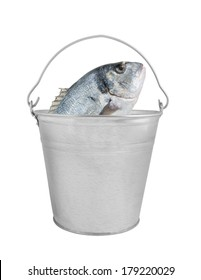 Fresh dorado fish in bucket isolated on white background