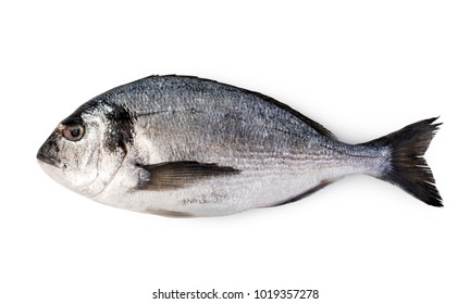fresh dorado fish isolated on white background.