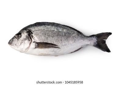 fresh dorado fish isolated on white background.