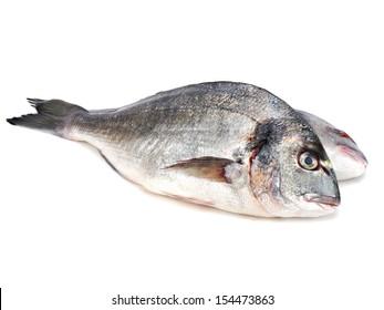 Fresh Dorado fish on a white background