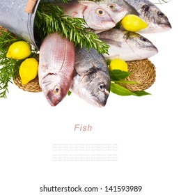 fresh Dorado fish and other fish in a tin bucket with fresh leaves and herbs and lemon isolated on white background