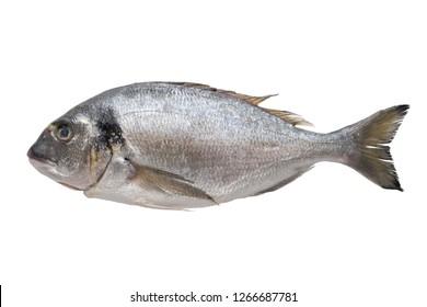 Fresh dorado fish. Top view, isolated on white.