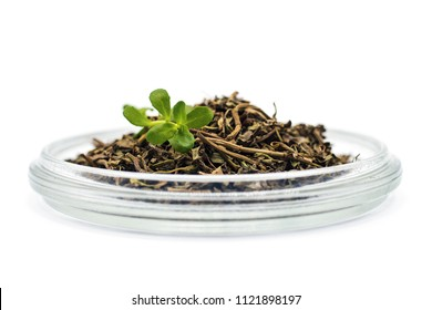 Fresh and dried bacopa medical herb, known from Ayurveda as Brahmi
