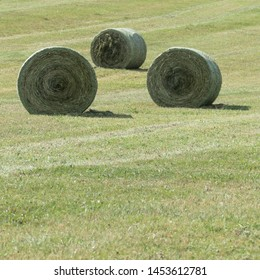 Fresh dried and compressed grassland plants in round bale nets on a meadow before wrapped in a foil. In the front of the image on the green grassland there is copy space.