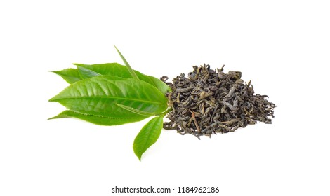 Fresh and dried green tea leaves  on white background