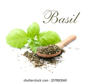fresh and dried leaf of basil isolated