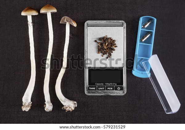 Fresh and dried psilocybin mushroom, gelcaps and digital pocket scale on black background, top view. Psychedelic therapeutic use.