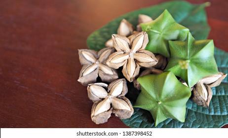 Fresh and dried Sacha Inchi nuts or Inca nuts on fresh leaves.