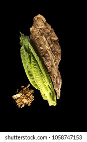 Fresh and dried tobacco leaves from above. Isolated on black background
