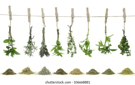 Fresh and dry herbs hanging on a rope. Isolated on white