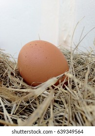 Fresh egg in straw nest.