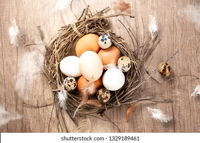 fresh eggs of different birds in rustic in nest with feathers