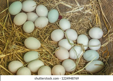 Fresh eggs in a nest photos and images stock