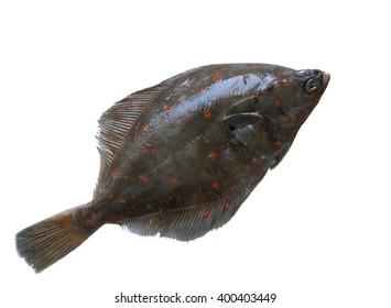 Fresh european flounder isolated on white background
