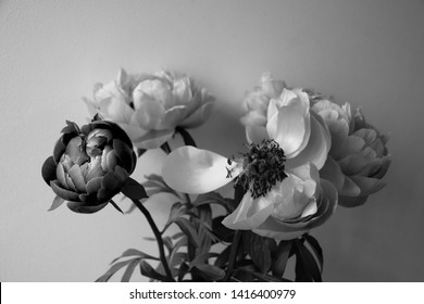Fresh and fading peony (with falling petal) flowers bouquet  against stone wall at background. Youth and elderly contrast. Funeral mourning card, death grief concept. Abstract art. Black white photo.
