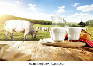 fresh farm milk on a sunny meadow of cows