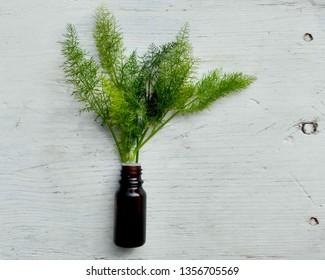 Fresh fennel plant & fennel essential oil on white wooden background. Macro bottle of fennel essential oil & fresh green tops on background. Foeniculum vulgare herb in dark glass bottle for massage