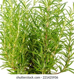 Fresh fines herbes, rosemary is isolated on white background, closeup
