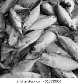 Fresh fish  art.