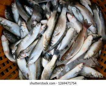 Fresh Fish in basket