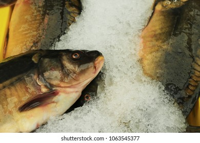 Fresh fish carp in ice