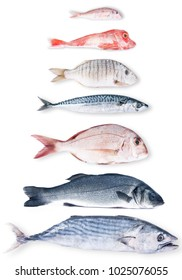 fresh fish collage on white background