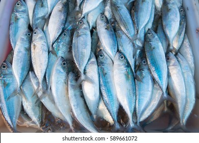 Fresh fish from commercial fisheries.