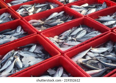 fresh fish in container box
