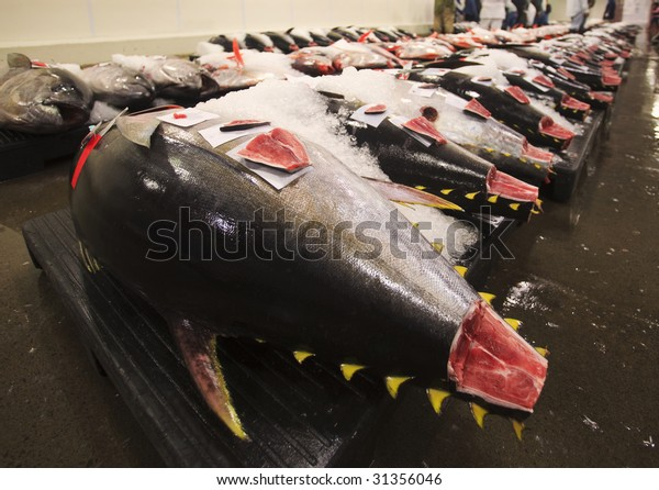 Fresh fish at the daily market auction at Honolulu harbor, Hawaii
