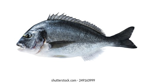 Fresh fish dorado sea bream on black board with salt for cooking magazines and recipes