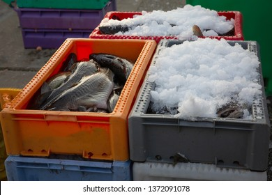 Fresh fish in ice container